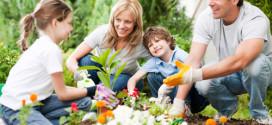 Садоводство становится популярным