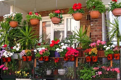 Цветы на балконе - балконная оранжерея
