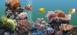 Декорируем аквариум