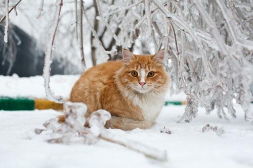 Как правильно подкармливать зимой птиц и других животных