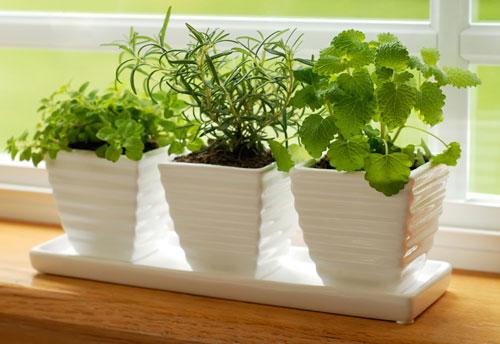 О пользе растений