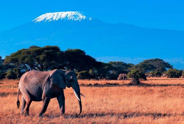 Удивительная Кения