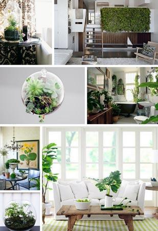 Комнатные растения в дизайне квартиры