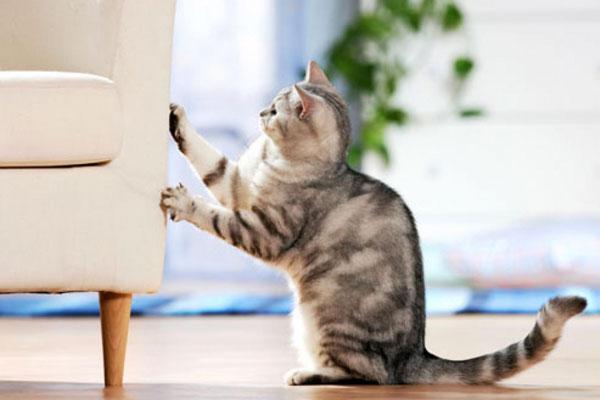 Как справиться с плохим поведением кошки