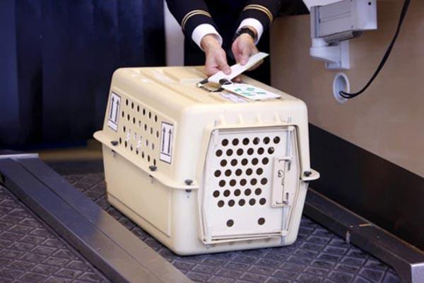 В самолет с котом