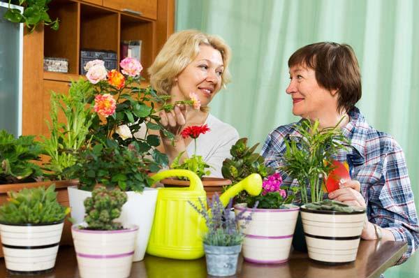 Способы ухода за декоративными растениями