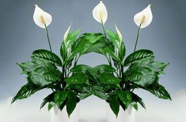 5 домашних растений для начинающего цветовода