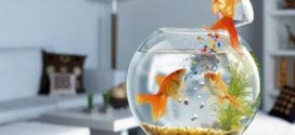 Как помочь рыбкам жарким летом