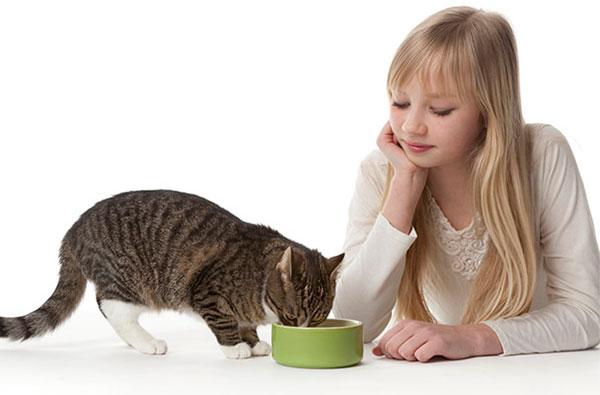 Советы по содержанию кошек в квартире