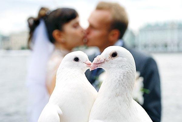 Свадьба и голуби