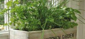 Как вырастить овощи и зелень на подоконнике