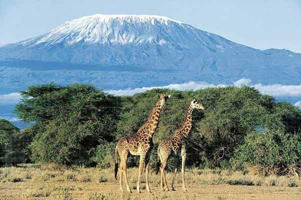 Экстремальный отдых в Танзании и Перу