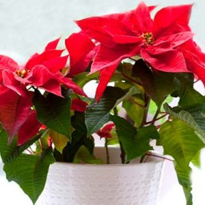 Растения, цветущие в зимнее время