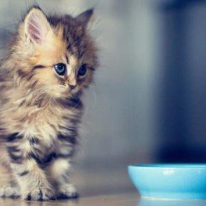 Корм для маленьких котят