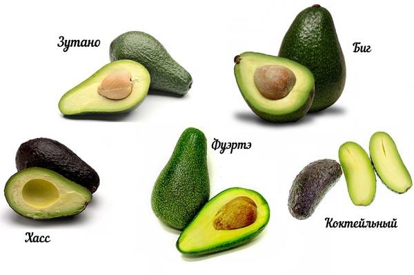 Как правильно выбрать авокадо в магазине?