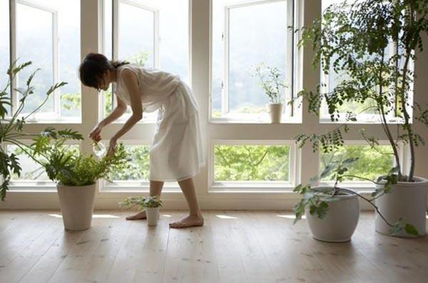 Комнатные растения, очищающие воздух в квартире – как подобрать?