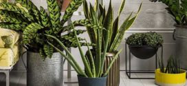 Комнатные растения, которые очищают воздух в квартире (фото)