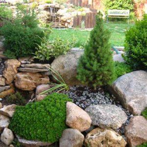 Растения в ландшафтном дизайне