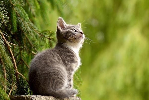 35самых интересных и удивительных фактов из жизни котов и кошек (фото)