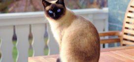 35 самых интересных и удивительных фактов из жизни котов и кошек (фото)