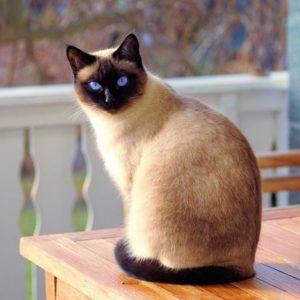 40 самых интересных и удивительных фактов из жизни котов и кошек (фото)