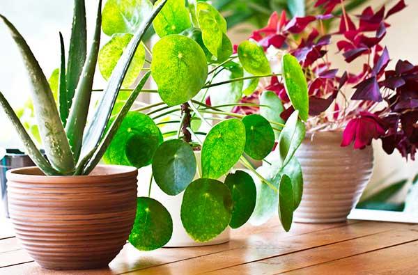 7 растений, эффективно очищающих воздух