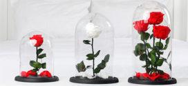 Роза в колбе: особенности, виды, советы по уходу