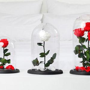 roza-v-kolbe