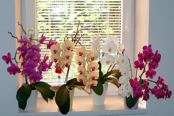 Орхидеи — не так капризны, как вам кажется