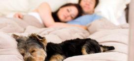 Лучшие породы собак для проживания в небольшой квартире