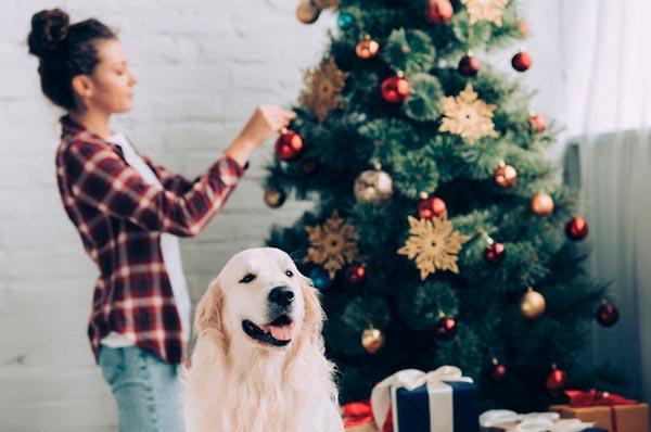 Новый год с домашним любимцем: 5 важных советов