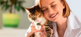Советы аллергикам: какие животные не несут опасности для здоровья?