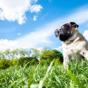 Как обезопасить животных во время жары: 6 способов
