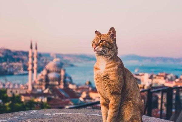 Как самостоятельно организовать путешествие в Стамбул
