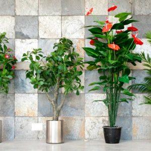 Как нам помогают комнатные цветы?