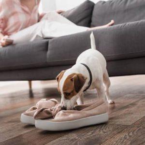 Собака грызет обувь: что делать?