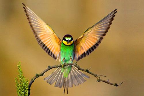 Финансовые проблемы: к какой птице вы относитесь