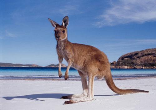 Экотуризм в Австралии