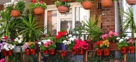 Цветы на балконе — балконная оранжерея