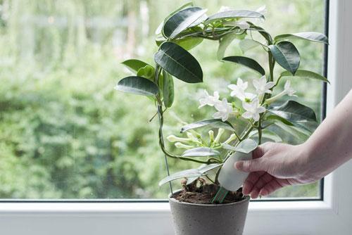 Причины гибели комнатных растений