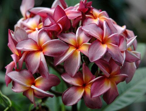 Ваши комнатные растения из тропиков