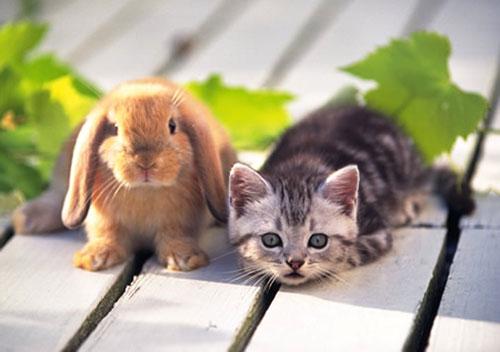 Как проводить год Зайца (Кролика, Кота)?