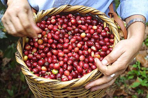 О пользе натурального кофе