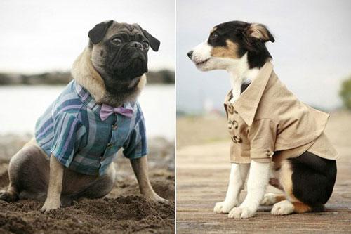 Одежда для собак, нужна ли она