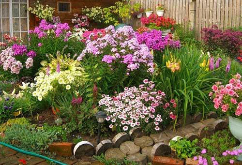 Цветник - добрососедство гордых красавицоседство гордых красавиц