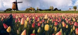 Что вы знаете о Нидерландах?