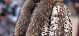 Новые тенденции в меховой моде. Осень – зима 2014–2015