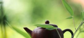 Как вырастить чай дома. Пошаговая инструкция