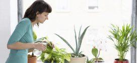 Чем полезны растения?