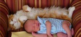 Детки и животные. Как ужиться с котом?